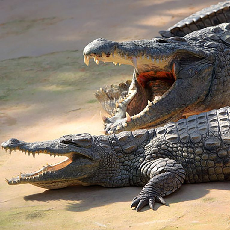 Deneys Croc Ranch